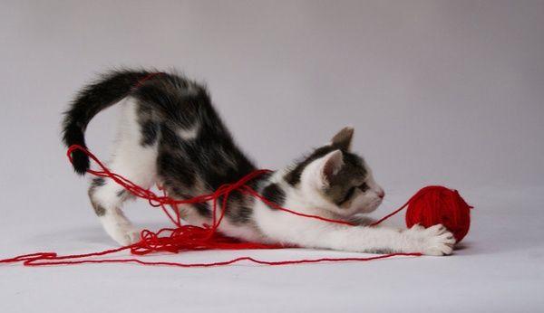 Cat-Ball-Yarn.jpg