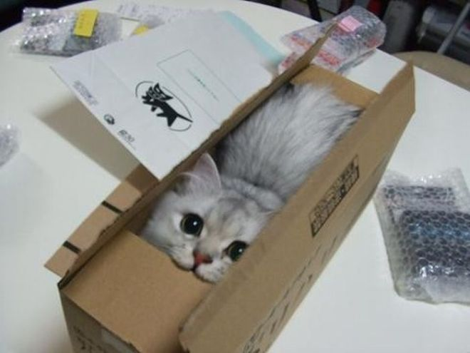 Cat-Boxes.jpg