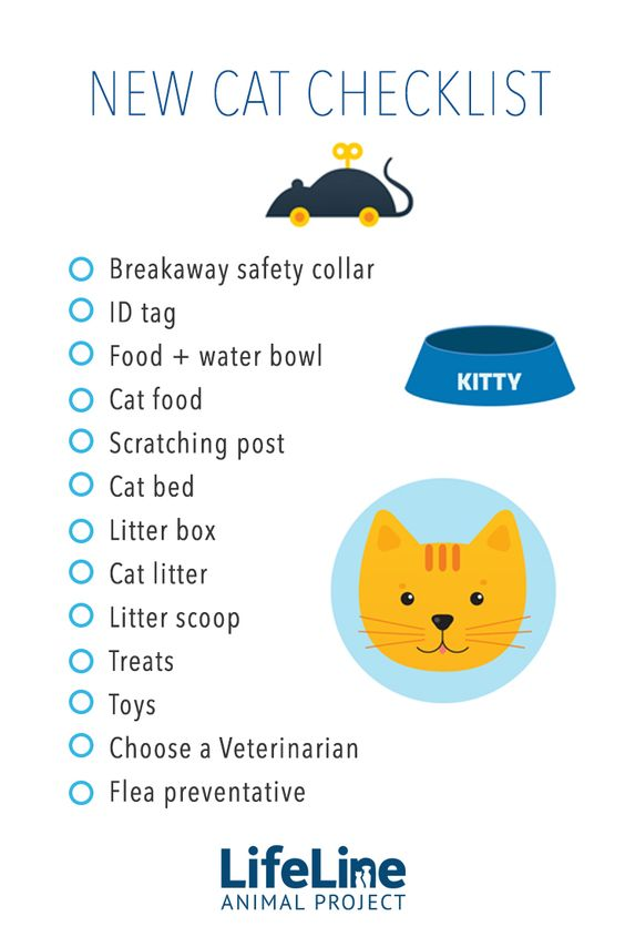 New Cat Checklist (LifeLine Animal Project)
