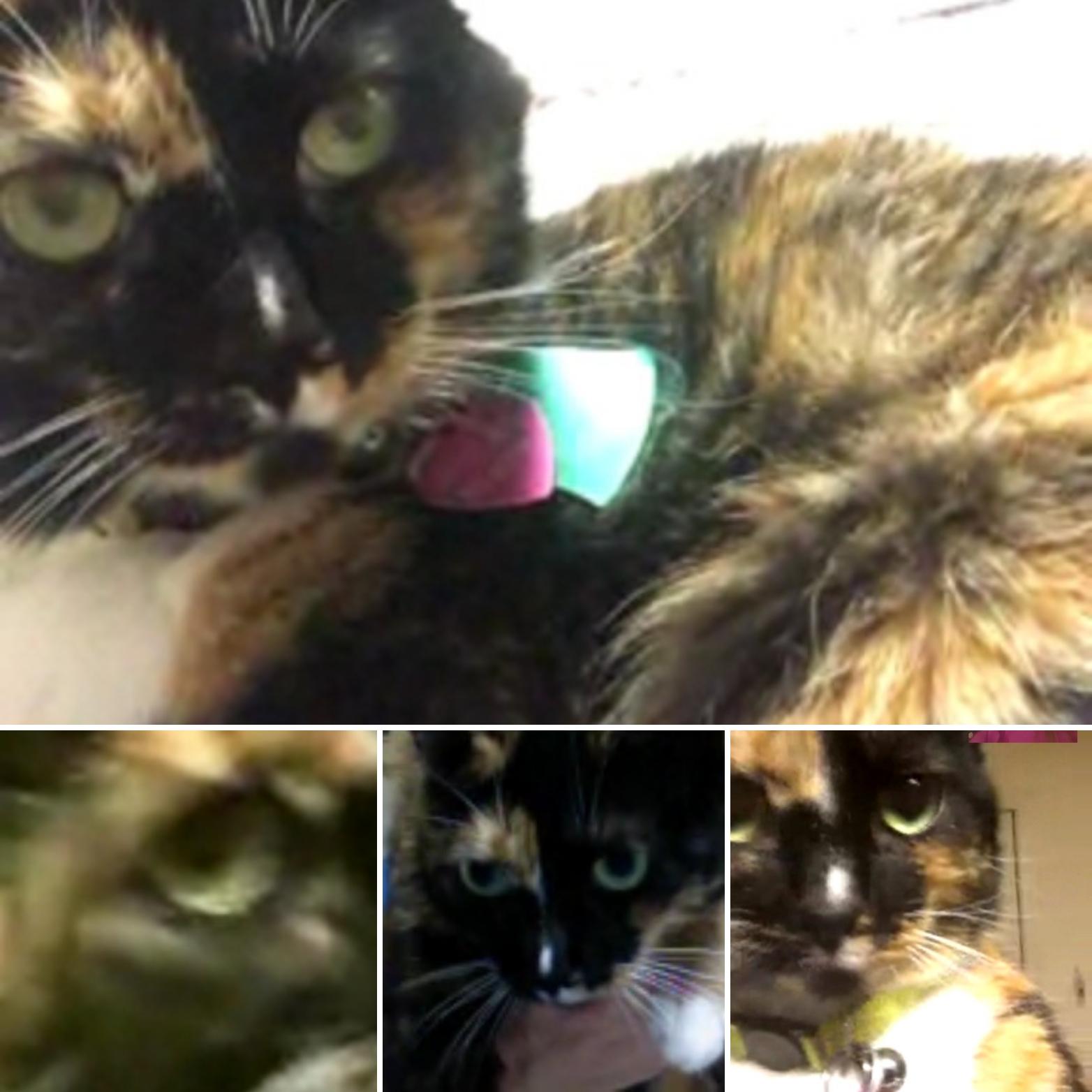 Calico Cat Day