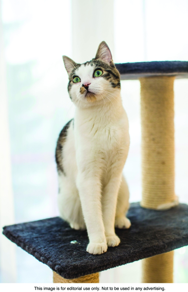 What is behind cat scratching?