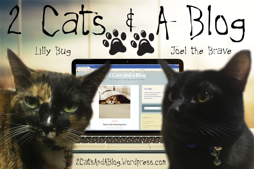 2 Cats and a Blog (Lilly Bug and Joel the Brave) https://2catsandablog.wordpress.com