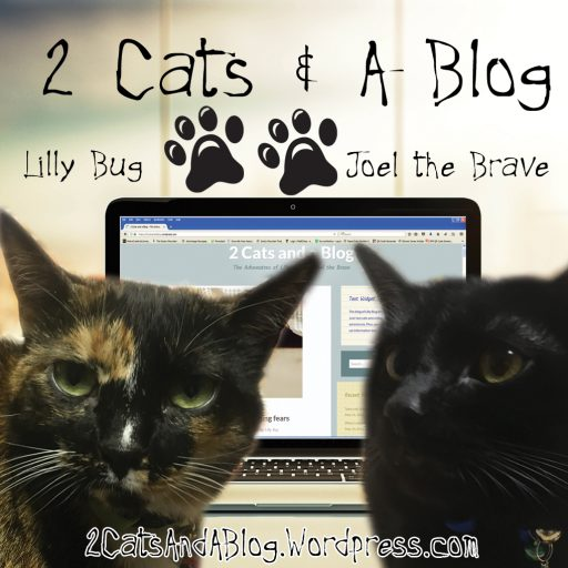 cropped-2-cats-and-a-blog-square.jpg