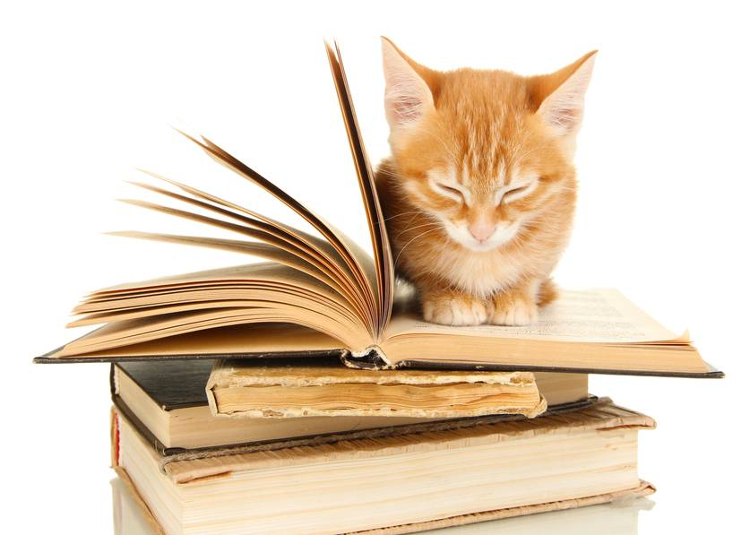 Cat Tales are Tales told by cats or about cats. Did you think I said Cat Tails? How about a list of famous cats in literature. A list of over 60 books about cats.