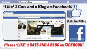 Please Like Us on Facebook 2 Cats and A Blog