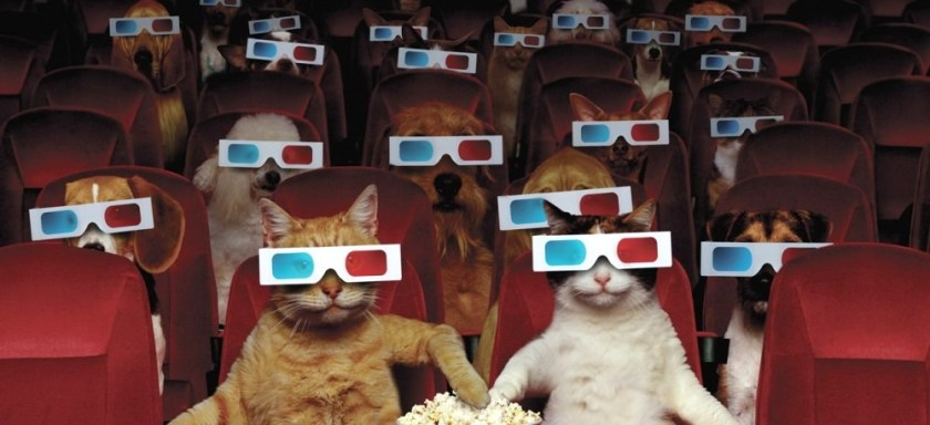 National Pets in Film Day (Cats and Dogs watching a 3D Movie)