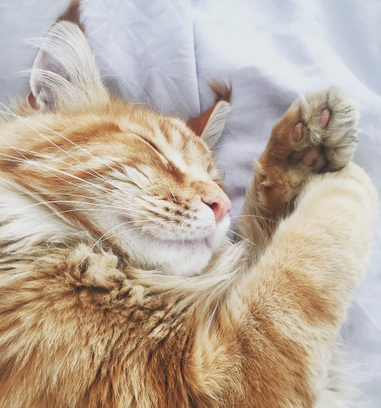 5 Humane Alternatives to Declawing