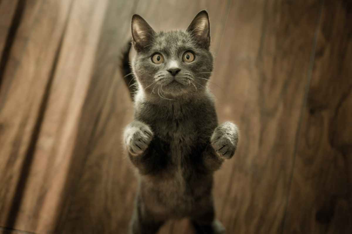 Meouch: Common cat ailments