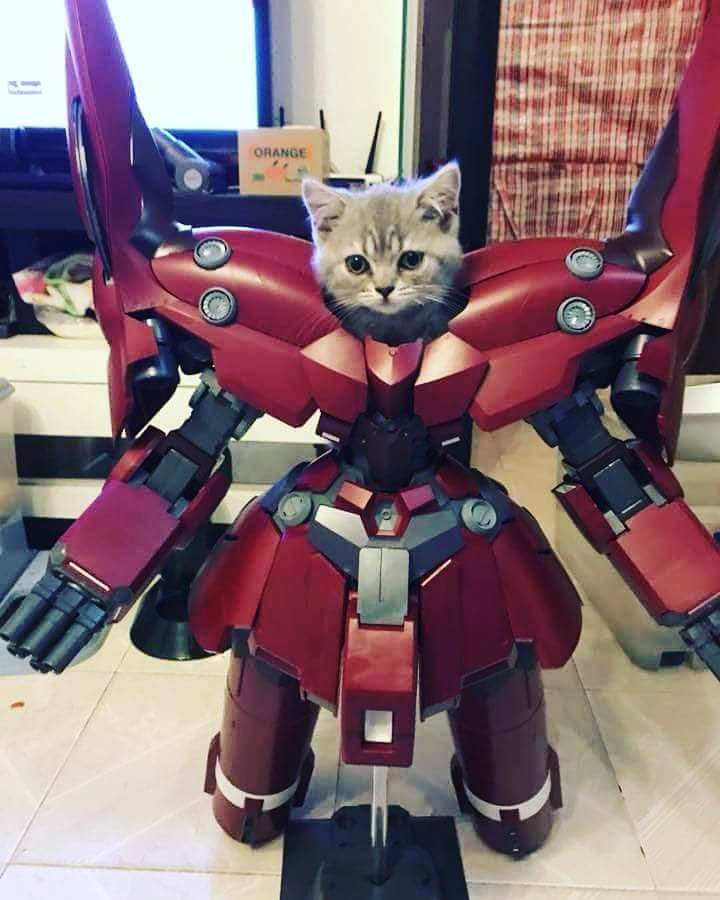 If hoomans can dress up, why not cats? Check out this cat dressed up like a Transformer!