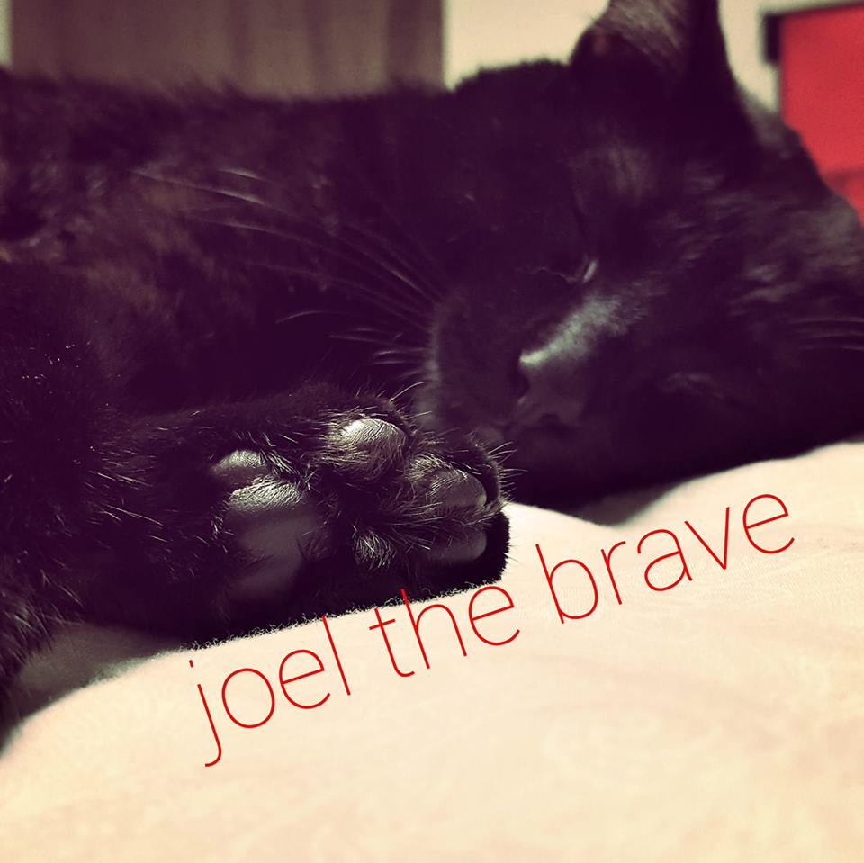 National Black Cat Appreciation Day - Joel the Brave