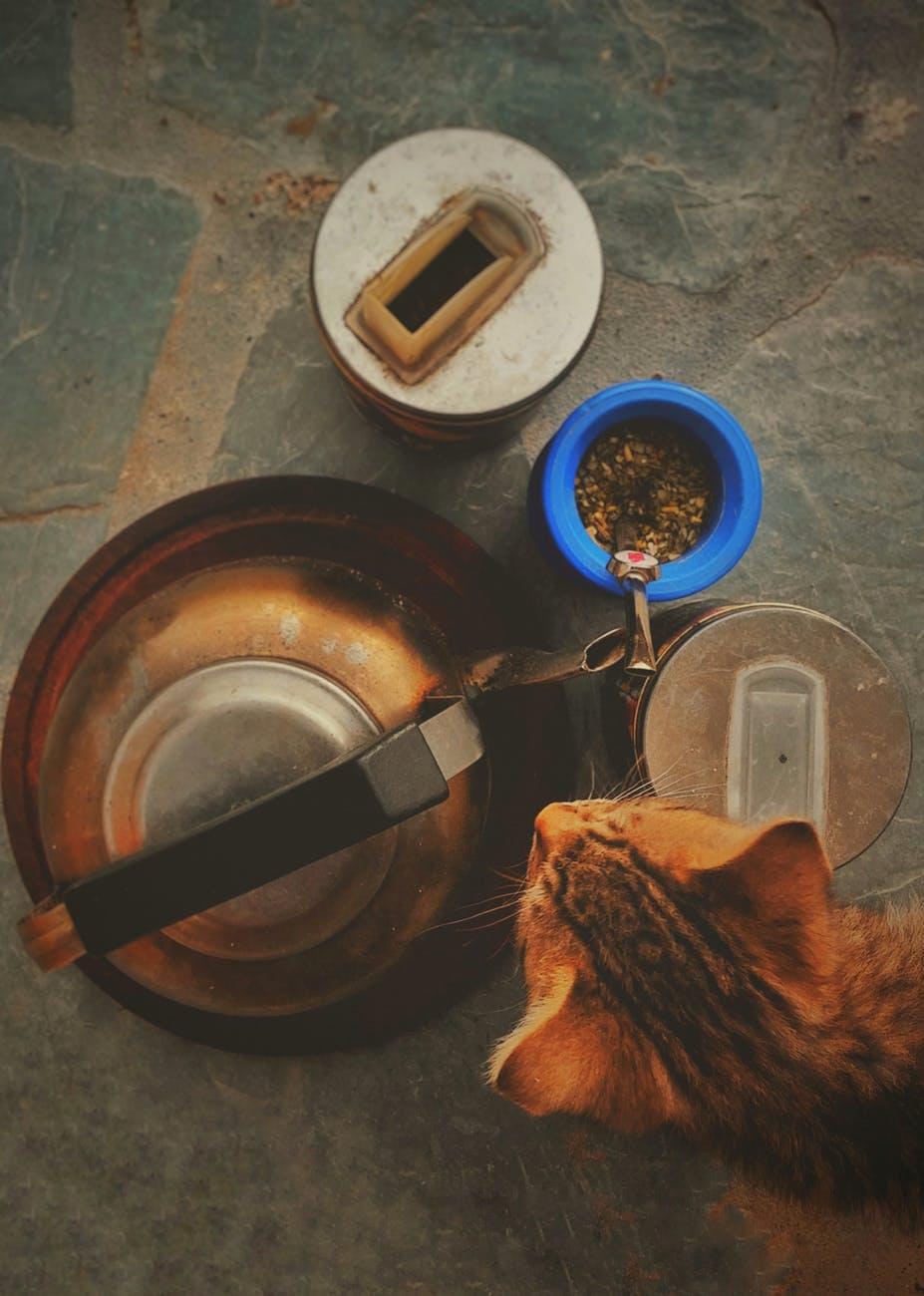 Cat Food Brands