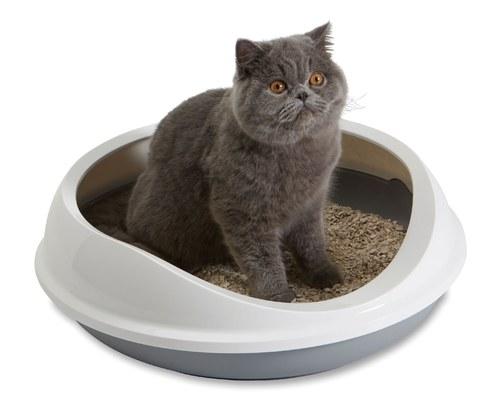 Litter box etiquette - etiquette on cat litter from Pet Dish TV.
