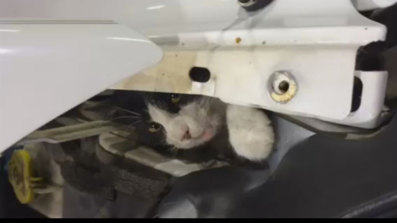Check your Hoods for Cats!