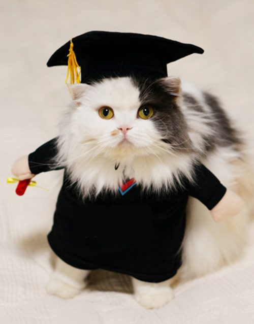 Graduate Cat Costume (felinology the study of cats)