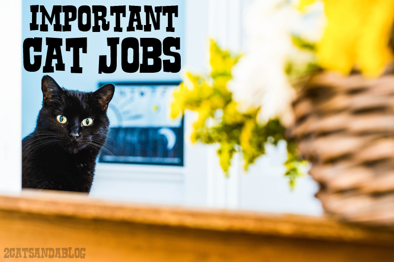 Important Cat Jobs