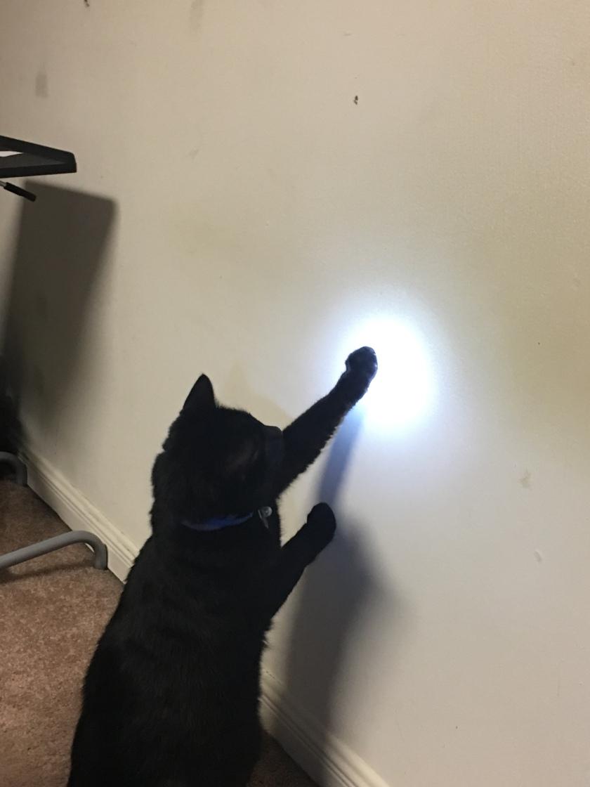 Cat Light Game