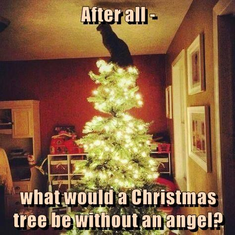 After all ... What would a Christmas Tree be without an angel?