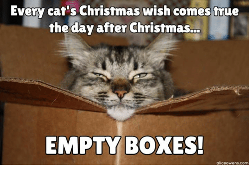 Every Cat's Christmas wish comes true the day after Christmas ... EMPTY BOXES!