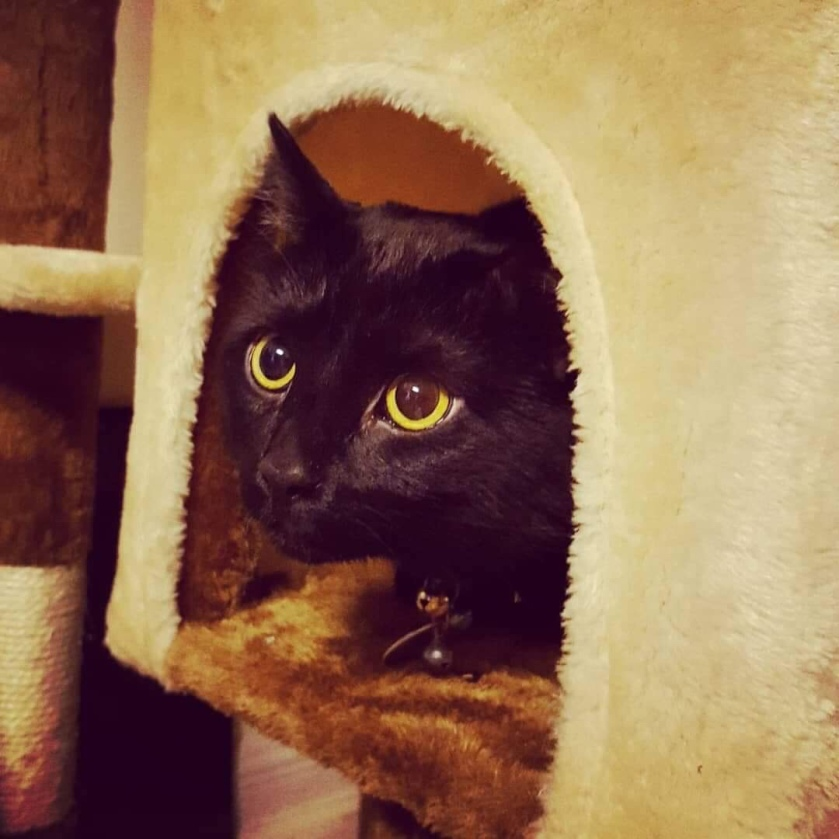 Joel the Brave in their Cat Cottage | Photo Credit Heather Patterson