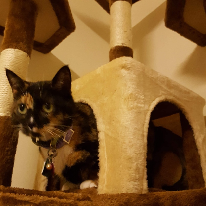 Lilly Bug in their Cat Cottage   Photo Credit Heather Patterson