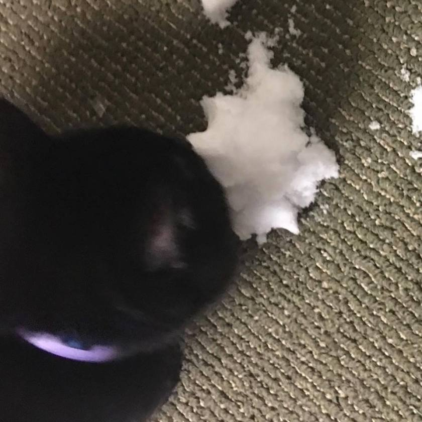 Joel the Brave Eating Snow (Snow Eating Cat)