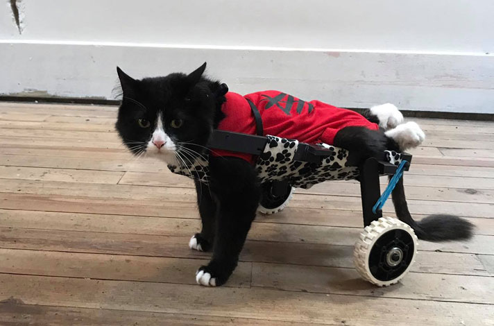 Meet Earl the Paralyzed Cat who has a special wheelchair to help him get around. He has a 3D-Printed wheelchair.