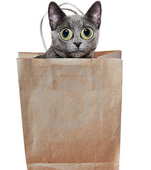 Letting the cat out of the bag is far easier than putting it back in - This is a true statement. It is very hard to put a cat in a bag, than to take him out of the bag.