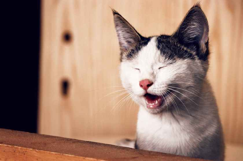 National Hairball Awareness Day - a day to raise awareness about hairballs in cats. It is part of the Pet Awareness Health events. #hairball #HairballAwarenessDay