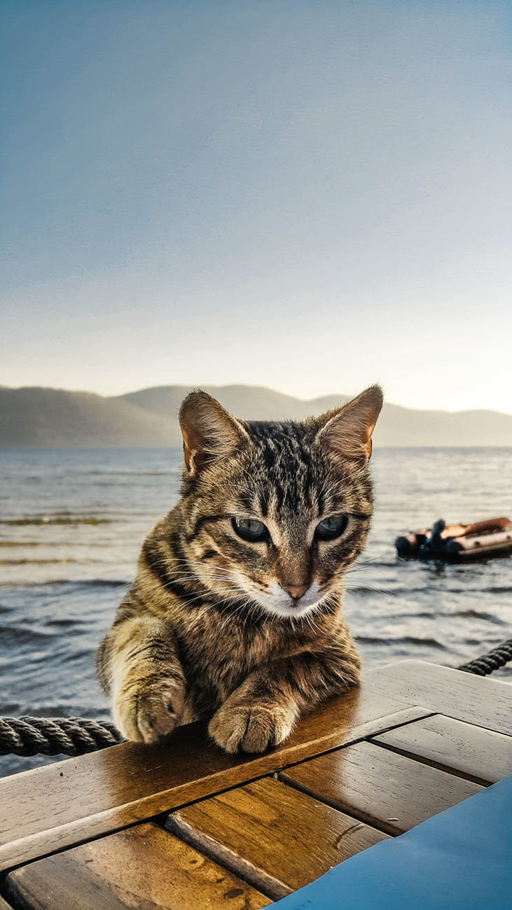 Australia to Kill Feral Cats - Australia is serious about trying to rid the country of feral cats by killing them.