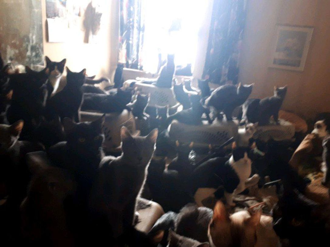 The 300 cats found in a Toronto apartment. (Toronto Cat Rescue)