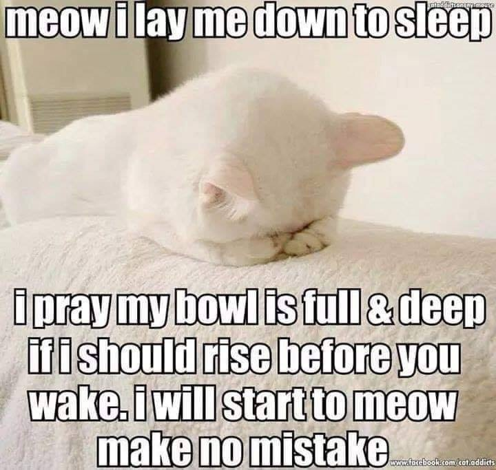 Meow I lay me down to sleep I pray my Bowl is full & deep if I should rise before you wake. I will start to meow make no mistake.