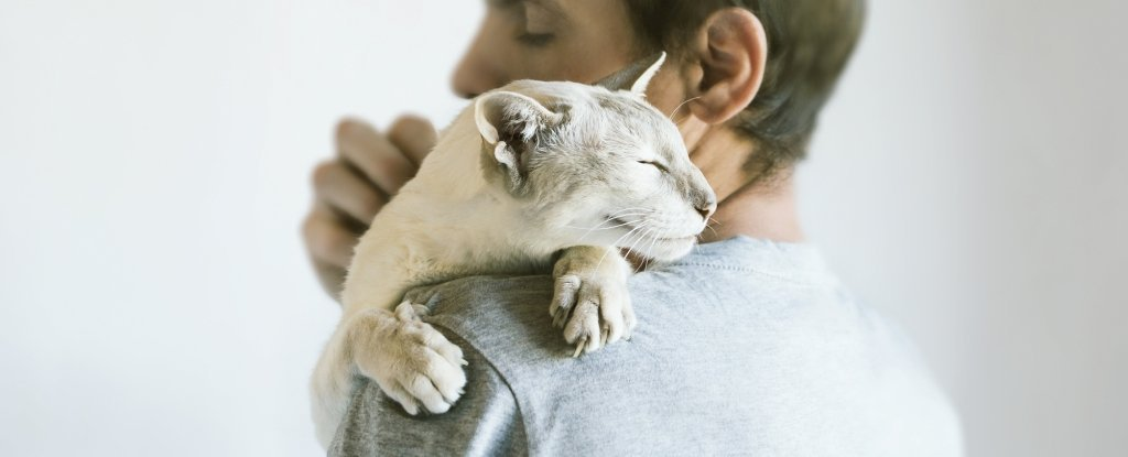 Cats Bond Securely to Their Humans Maybe Even More Than Dogs Do